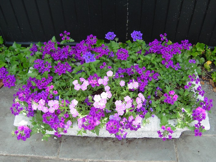 Planter boxes can provide great color on a patio
