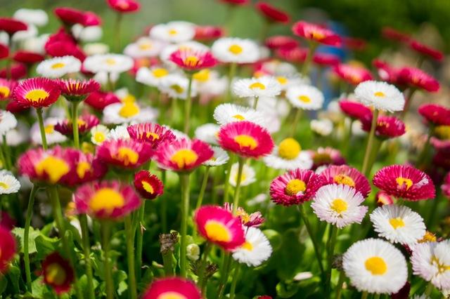 Annul Flowers