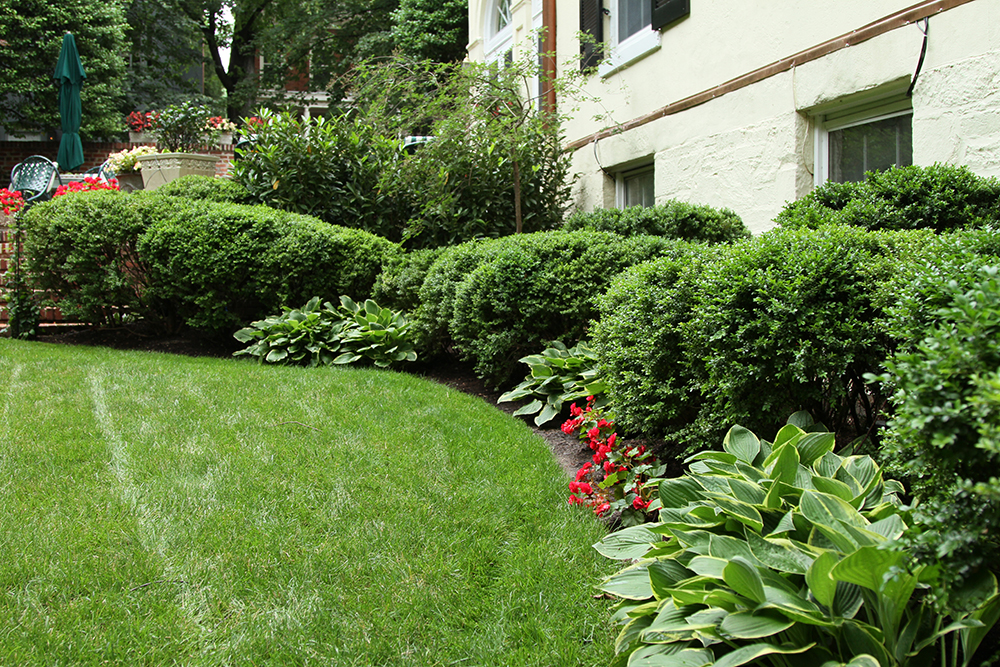 Plantings and Maintenance