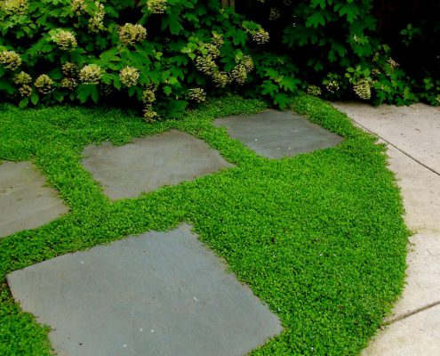 Stepping Stones and Ground Cover