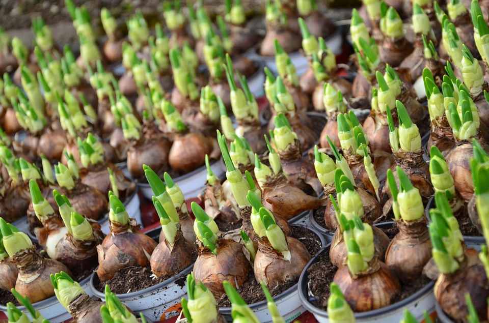 Fall Is The Best Time To Plant Bulbs For Spring Blooms